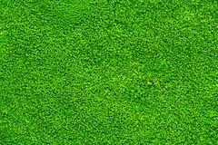 Texture of moss for pattern and background Royalty Free Stock Image