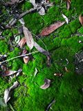 Texture. The mossy Forrest floor Royalty Free Stock Image
