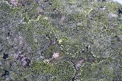Texture mossy granite Stock Photo