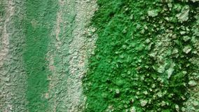 Texture of mossy wall with green background. Mossy texture background royalty free stock photos