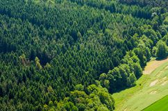 Texture of mostly coniferous forest in an aerial view Royalty Free Stock Photo