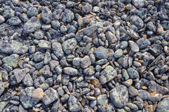 Texture of mottled round pebbles in tundra Stock Photos