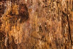 Texture of Mountain ash wood