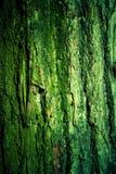 Texture moussue verte d'écorce d'arbre Photos libres de droits