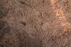 Texture of mud with footprints of animals and people's shoes Stock Photos