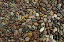 Texture of multicolored wed stones. Stock Photos