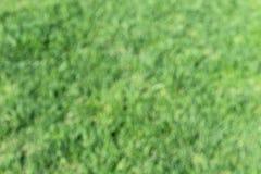Texture murky background green leaves of fresh grass. Background, vert, green, abstract, texture, bokeh, light, design, soft, color, illustration, decoration Stock Images