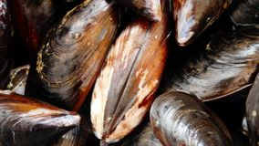Texture of mussels. Outdoor in the garden stock footage