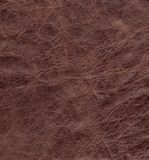 Texture of natural brown crumpled skin Stock Photo