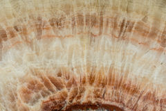 Texture of natural marble Stock Photography