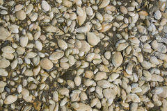 Texture with natural shells Stock Images