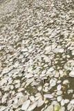 Texture with natural shells Stock Photos