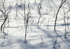 Texture of natural snow and twigs Royalty Free Stock Photos