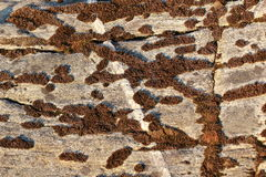 Texture of natural stone Royalty Free Stock Photography