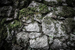 Texture of natural stone and moss Stock Photography