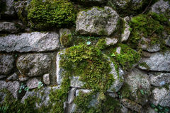 Texture of natural stone and moss Stock Photos