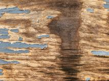 Texture of wood plank with cracked gray paint, spot of water spillage, abstract background. Royalty Free Stock Photo
