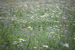 Texture naturelle d'eco Image libre de droits