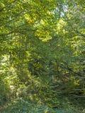 Texture naturelle de forêt l'automne image stock