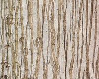 Texture naturelle de palmier Image libre de droits