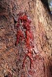 Texture naturelle foncée de sève d'arbre - parfaite pour des jeux vidéo, la conception web, la conception visuelle ou des signes  photos stock
