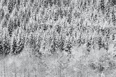 Texture neigeuse de forêt d'hiver photos stock