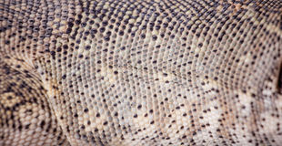 Texture of Nile monitor skin Royalty Free Stock Image