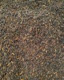 Texture noire de riz Photos libres de droits