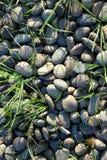 Texture noire de roche de rivière Images libres de droits