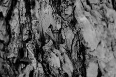 Texture noire et blanche d'écorce d'arbre photographie stock libre de droits
