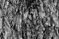 Texture noire et blanche d'écorce d'arbre images libres de droits