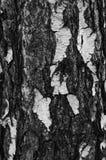 Texture noire et blanche d'écorce d'arbre Image stock