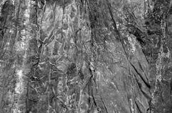 Texture noire et blanche d'algue de varech, regards abstrait Photos stock
