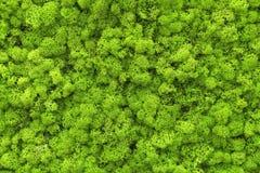 texture normale de fond de plan rapproché de lame abstraite de vert Image libre de droits