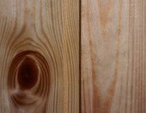 Texture o close up bonito claro das cadelas da árvore da idade do anel Imagem de Stock Royalty Free