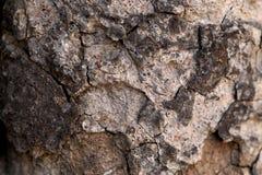 Texture o fundo da casca de uma árvore Imagens de Stock