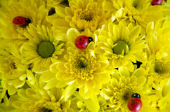 Texture o projeto vermelho do amarelo dos insetos da natureza do fundo das flores imagens de stock royalty free