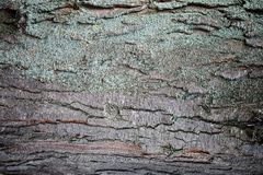 Free Texture Of Bark Of A Tree, Abstract Background. Stock Photography - 104901532