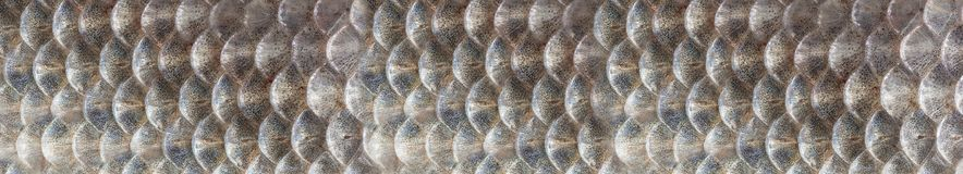 Texture Of Fish Scales Close-up Royalty Free Stock Images