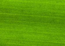 Free Texture Of Leaf Stock Photos - 24243753