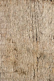 Texture Of Oak Plank Stock Photography