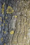 Texture Of Tree Bark, With Lichen And Moss Stock Photo