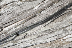 Texture Of Wood Of An Old Juniper Royalty Free Stock Photos