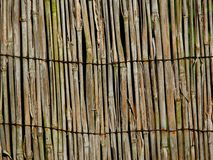 Reed fence old  bamboo texture. Texture of old bamboo reed fence Stock Image