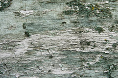 Texture of old bark wood Stock Photography