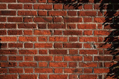 Texture of a old brick wall Royalty Free Stock Photos
