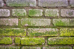 Texture of old brick wall covered moss Royalty Free Stock Photography