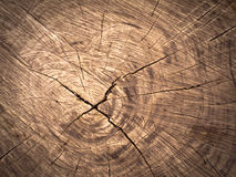 Texture of old brown Cut wood Stock Images