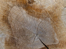 Texture of old brown Cut wood for background.  Royalty Free Stock Images