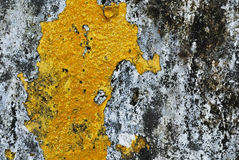 Texture of old concrete grunge wall  with lichen moss mol Royalty Free Stock Images
